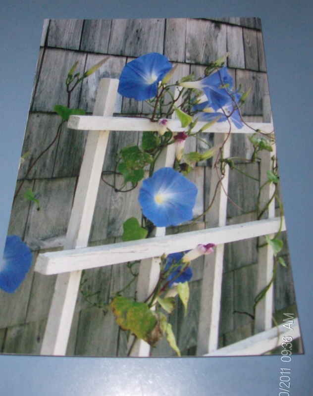 This is the picture I used to create the Morning Glory wall hanging.